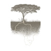 Africa, african, flora, grasslands, landscape, nature, roots, savanna, symbol, thorn, tree, umbrella